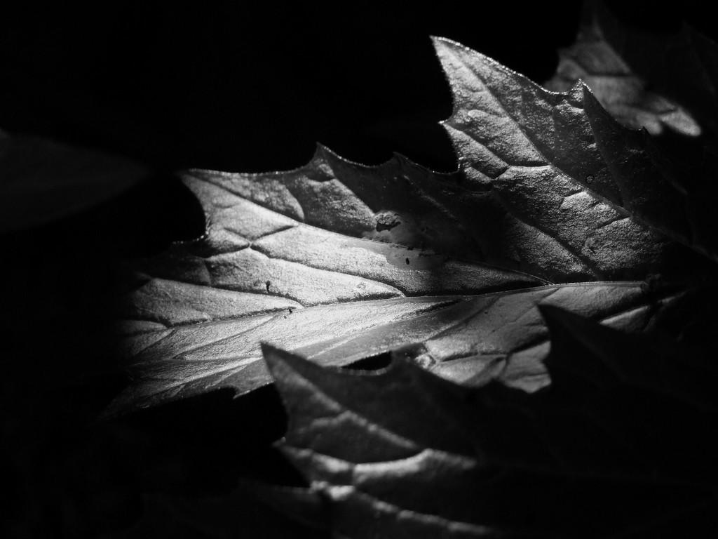 Flora in b&w by frappa77