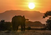 21st Jan 2018 - Elephant in Setting Sun