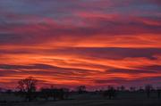 30th Jan 2018 - Pastoral Sunset