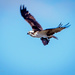 Osprey Says, Make Mine To Go