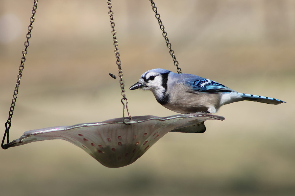 Seed Toss by cjwhite
