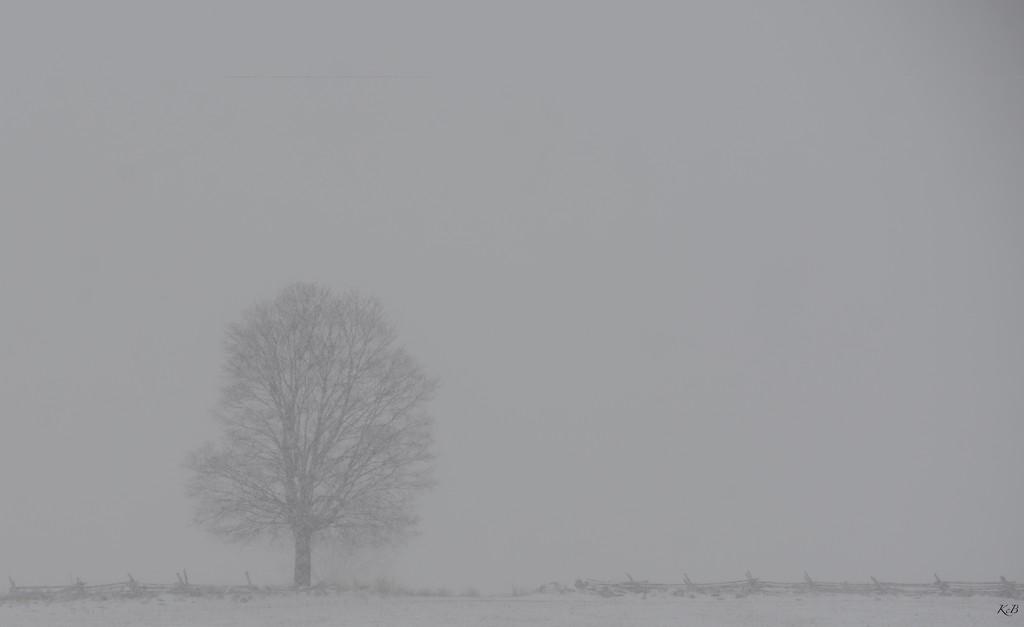Blizzard by kathiecb