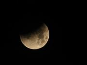 31st Jan 2018 - Super Blue Blood Moon