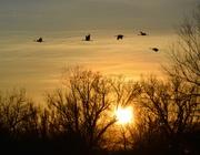 1st Feb 2018 - Ladd S. Gordon sunset