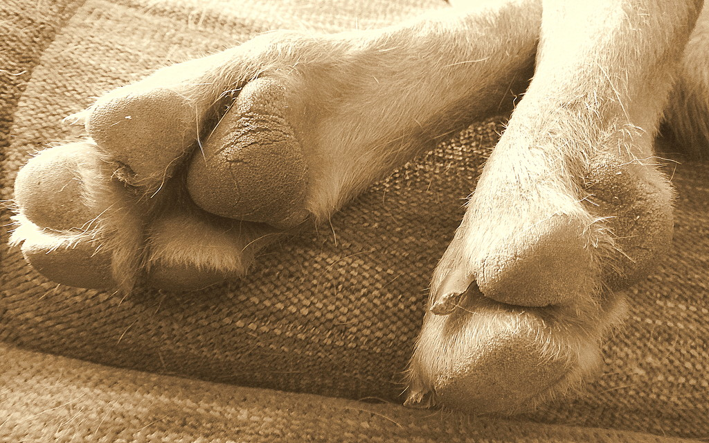 My, what big paws you have! by homeschoolmom