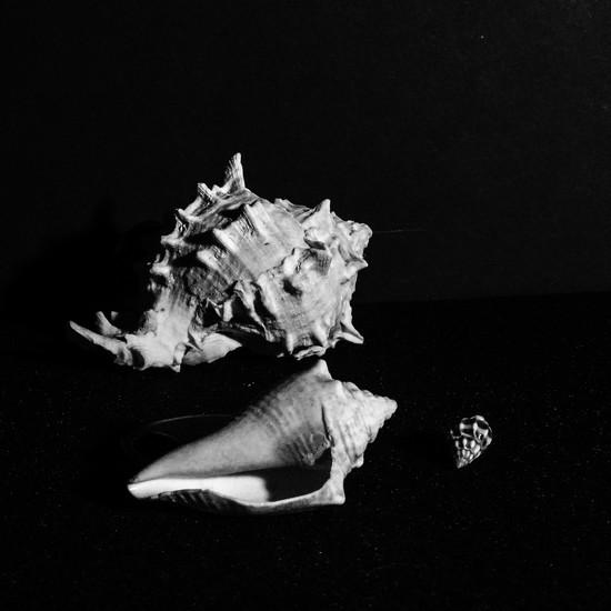 Shells by randystreat