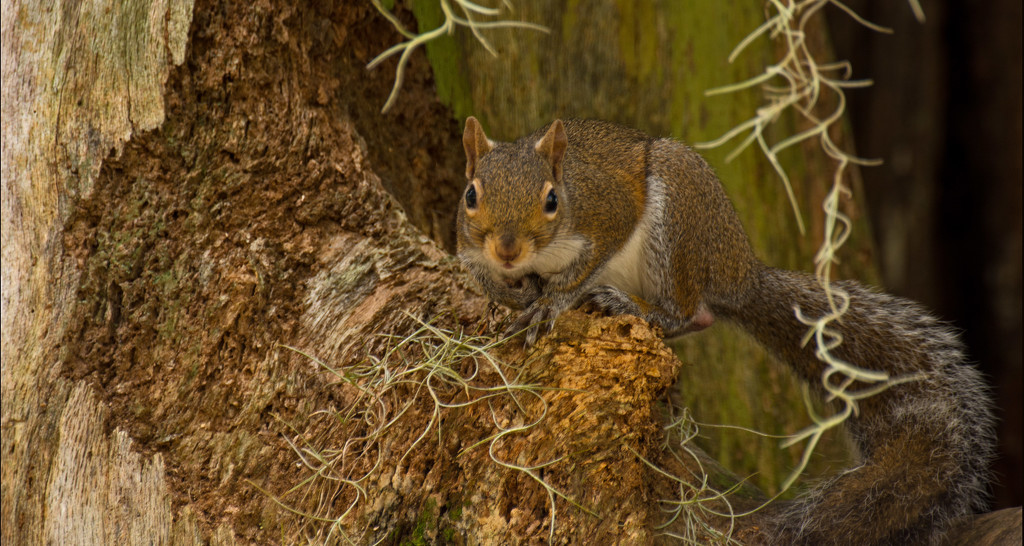 Squirrel Ready to Jump! by rickster549