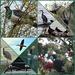 2017 NZ Birds