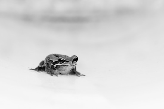 bucket frog by wenbow