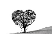 2nd Feb 2018 - Valentine Tree for WWYD