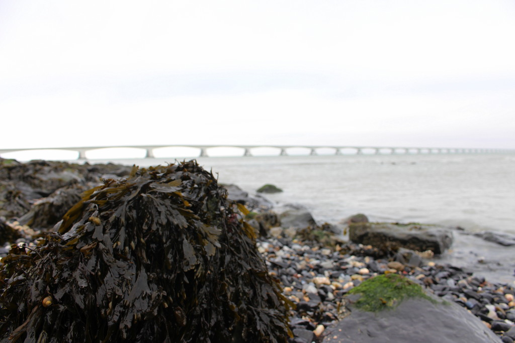 The bridge. by pyrrhula