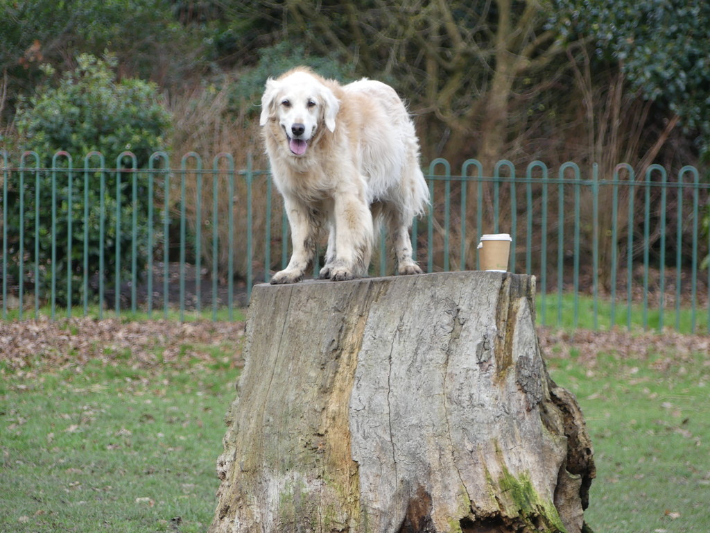 Amber On A Tree Trunk by snoopybooboo