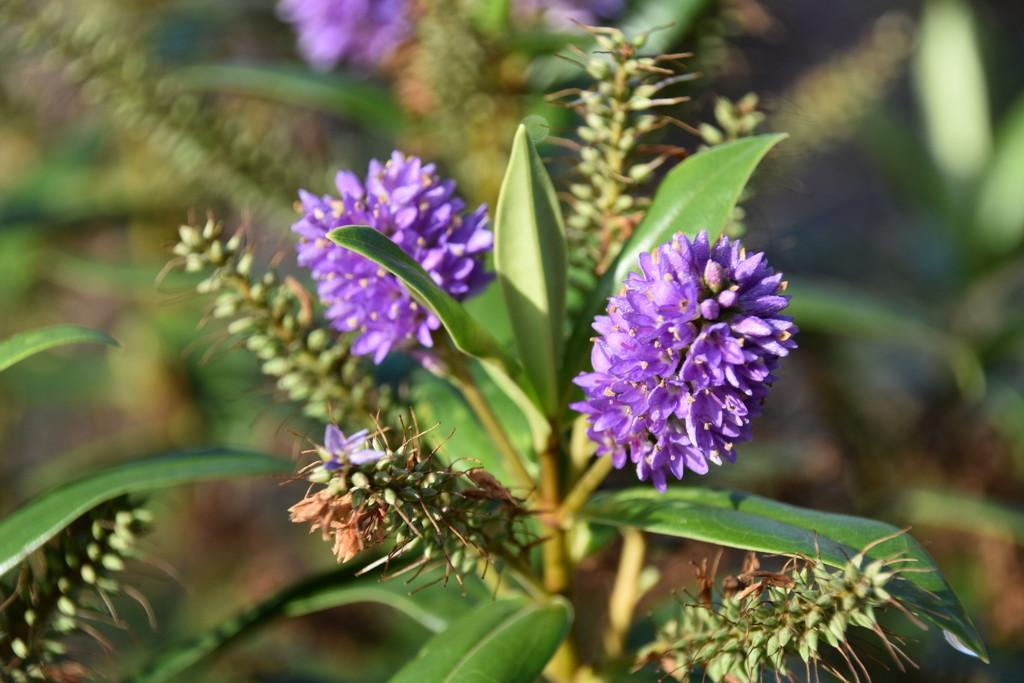 Purple Flower by gillian1912