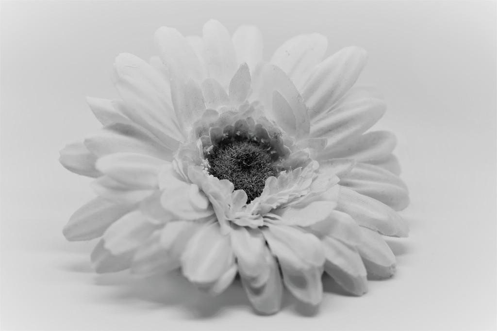 White on White by phil_sandford
