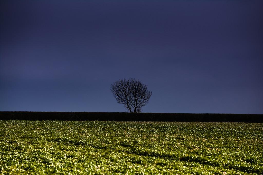 lone tree by ilovelenses