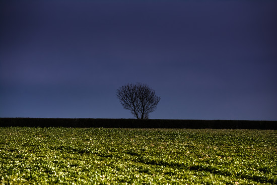 lone tree by ilovelenses