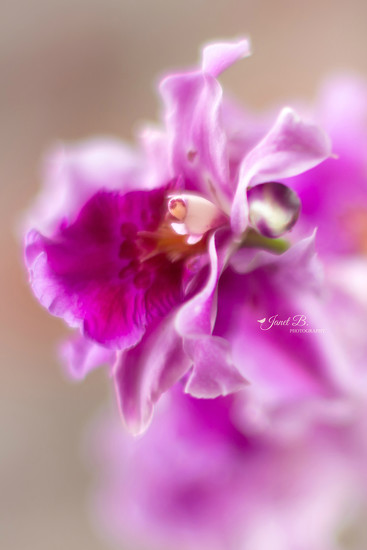 Orchids by janetb