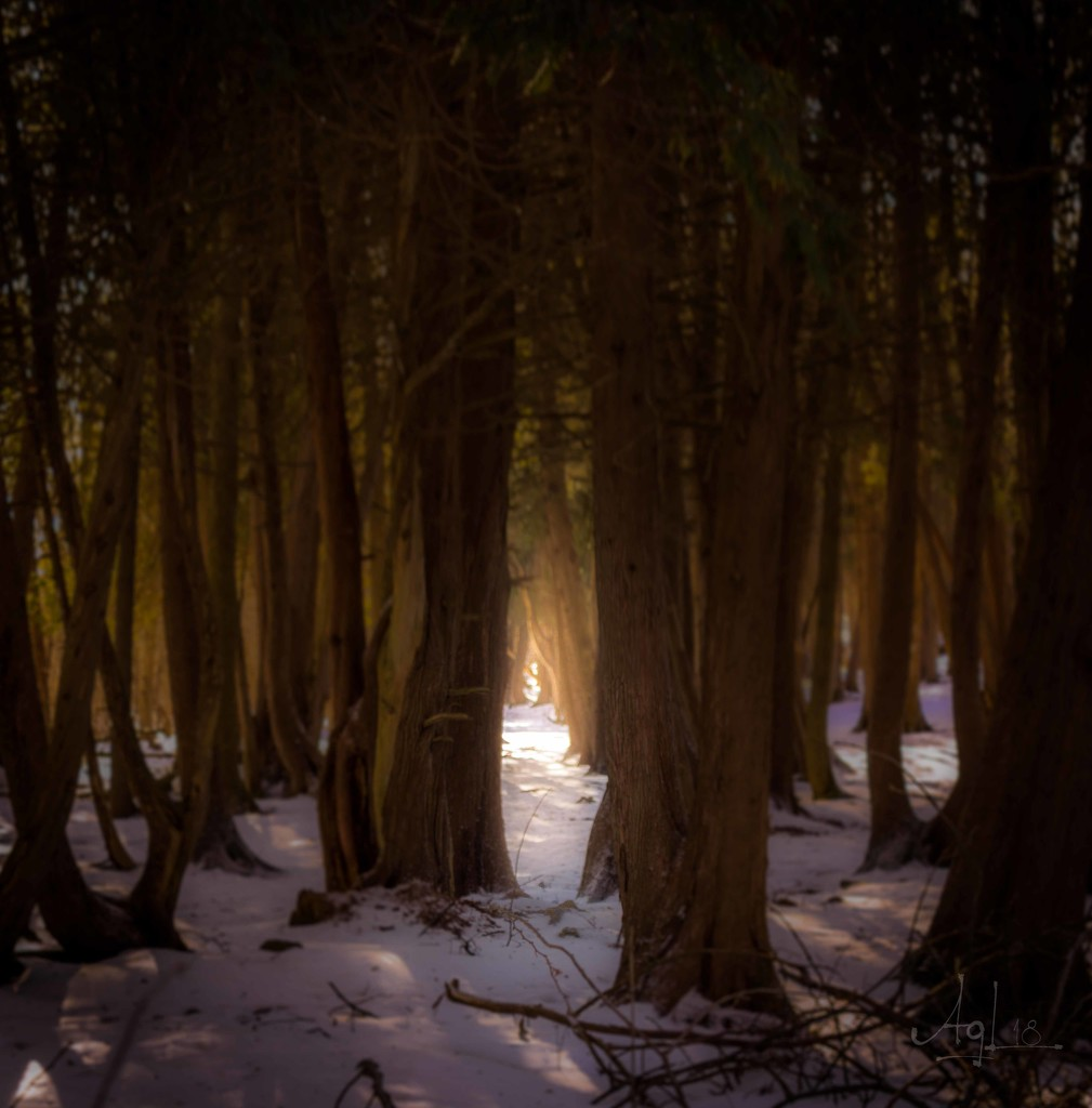 Enchanted by adi314