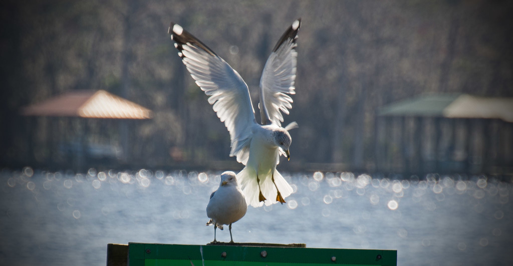 Move Over, I'm Coming in for a Landing! by rickster549