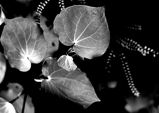 Leaves of the heart by kiwinanna