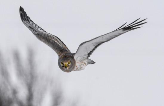 Sky Prowler by kareenking