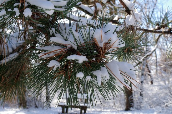 winter-tide by borof