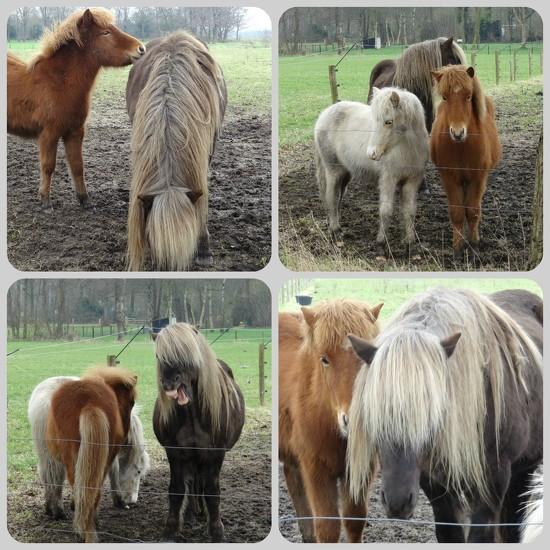 ponies by gijsje