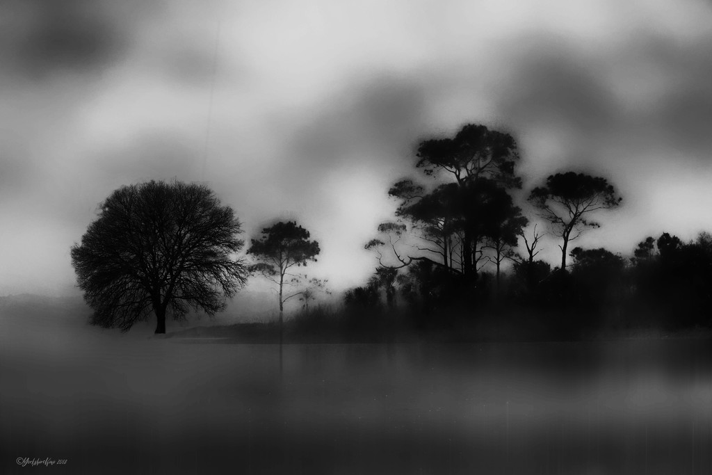 Mike's Tree in The Mist by yorkshirekiwi