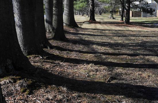 Afternoon Shadows by loweygrace