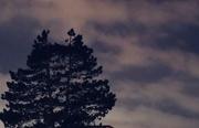 5th Feb 2018 - Tree against the Night Sky