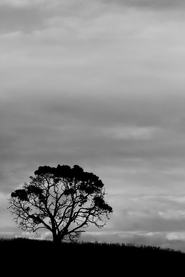 overcast by wenbow