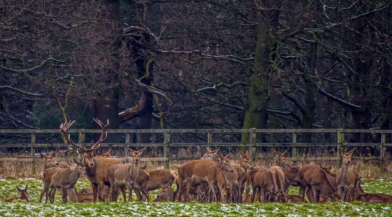 Stag And Harem. by tonygig