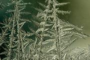 6th Feb 2018 - Jackfrost Trees