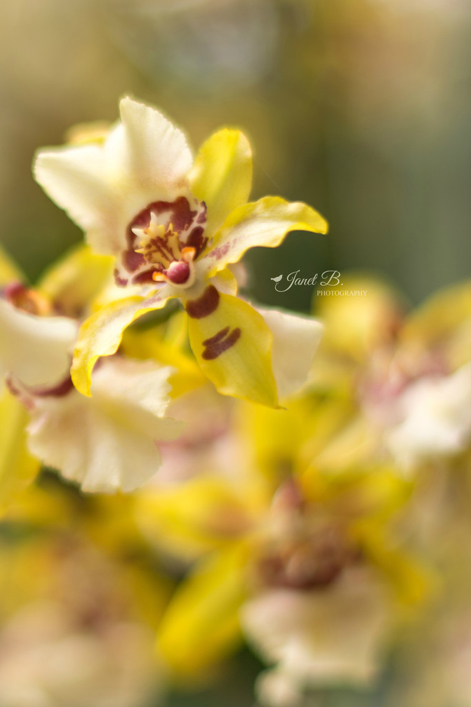 Cheery Yellow by janetb