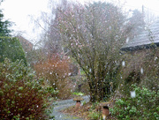 6th Feb 2018 - Snow flakes falling...