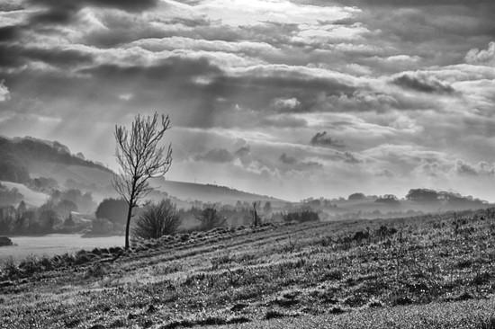 Hillside by fbailey