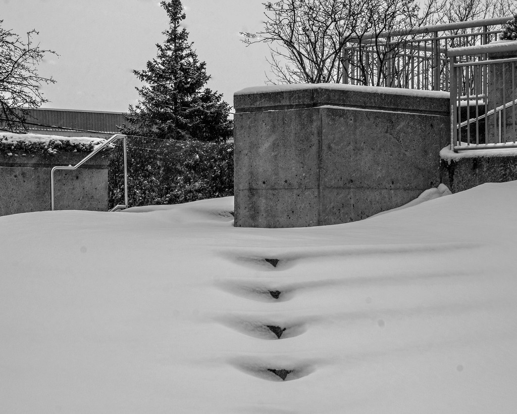 Someone forgot to Shovel the Stairs by farmreporter