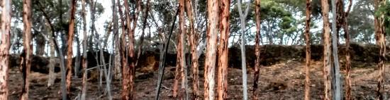Eucalyptus Ridge by 30pics4jackiesdiamond