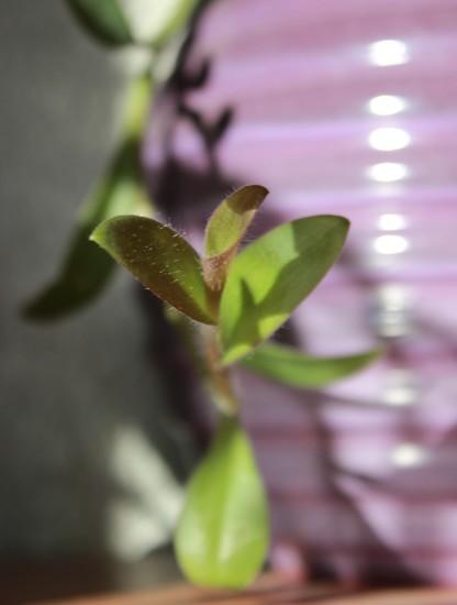 Grow by violetlady