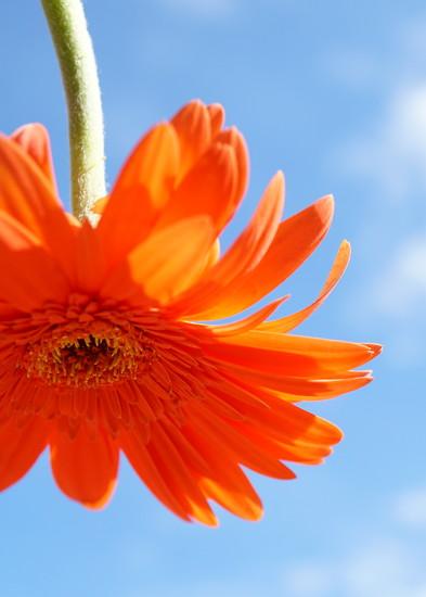 Happy Joy by sunnygirl