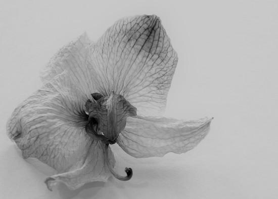 Fallen Blossom by daisymiller