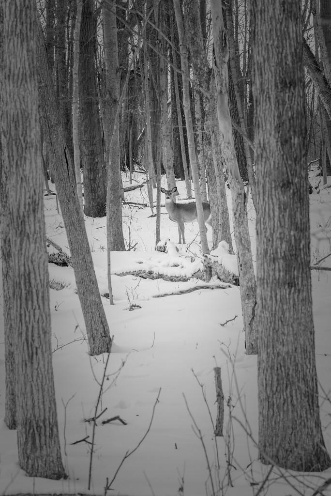 flashofreddeer by jackies365