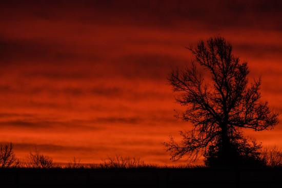 Orange Dawn by kareenking