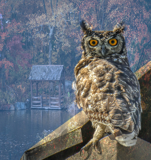 A Spotted Eagle Owl..... by ludwigsdiana