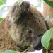some days ... by koalagardens