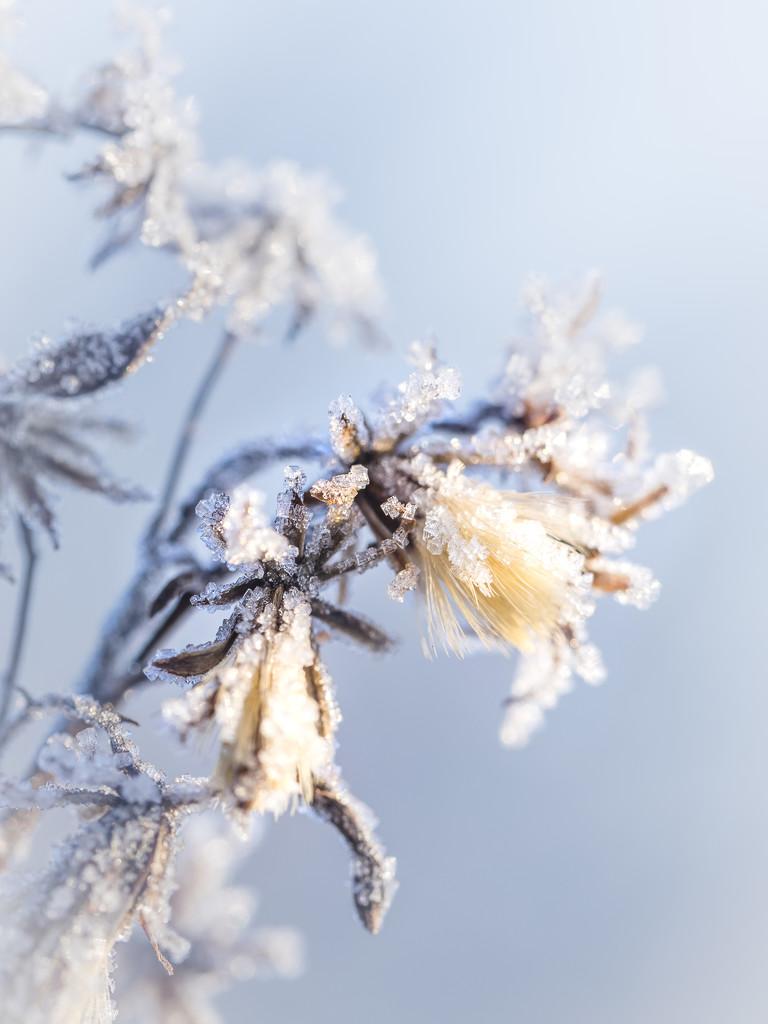 On a frosty morning by haskar