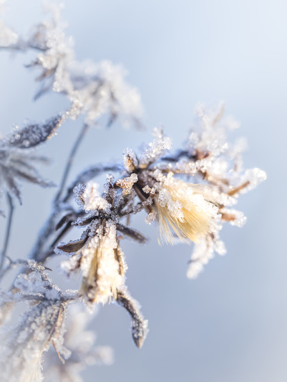 On a frosty morning by haskar