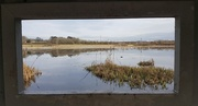 8th Feb 2018 - View from the Bird Hide