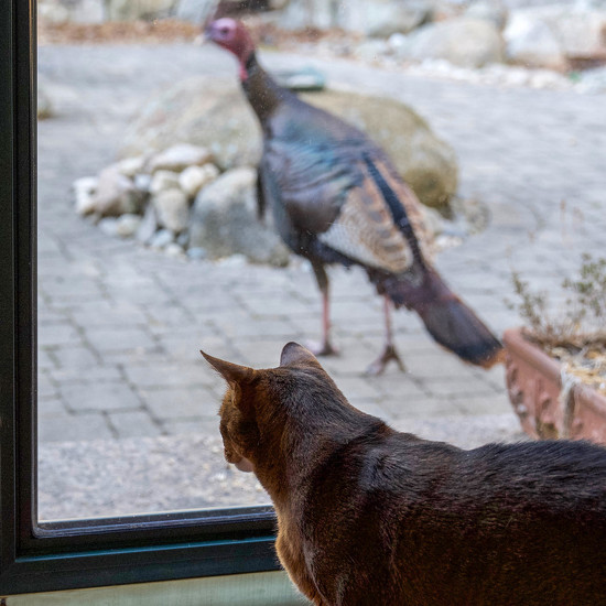 Gazing at gobblers by berelaxed