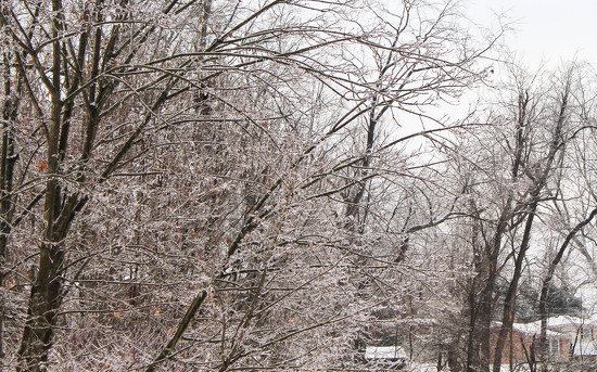 Ice on the trees by mittens